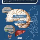 Физиология эндокринной системы: учебное пособие